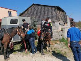 Terapijsko jahanje u Udruzi za podizanje kvalitete življenja Flyer u Molvicama